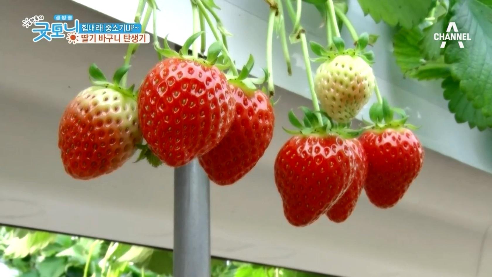 힘내라! 중소기UP~ 딸기 바구니 탄생기 이미지