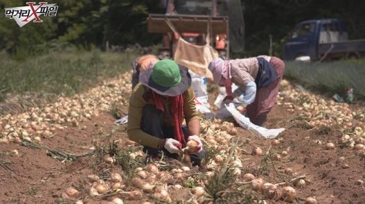 '먹거리X파일' 비대제 쓰지 않는 양파? 착한 농부 찾기