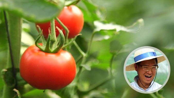 [5회/토마토]
