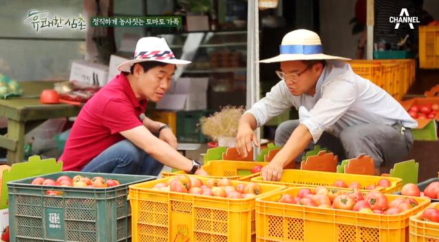 토마토 농부가 알려주는 '좋은 토마토 고르는 법' 大 공개! 이미지