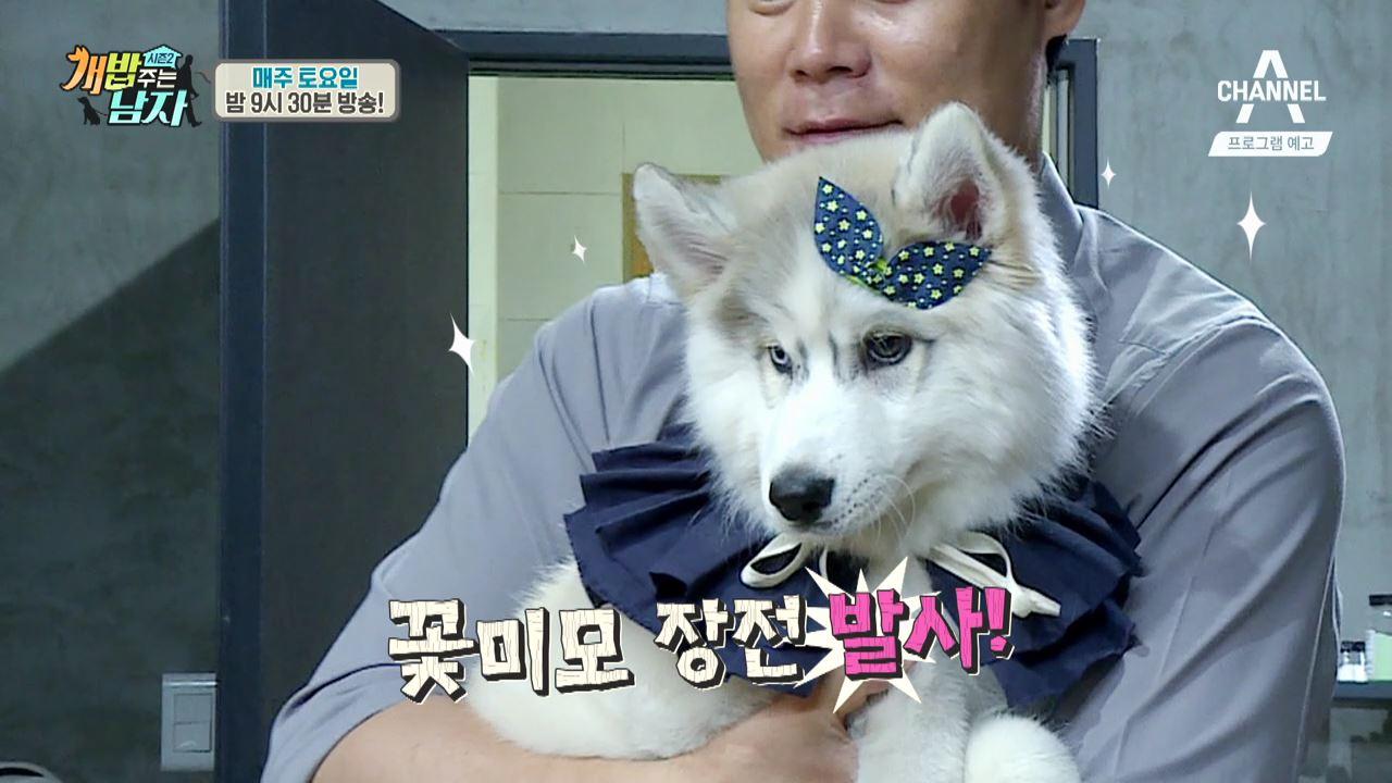 [상시예고] 강아지 요원! 심쿵 미션을 수행하라! 개밥주는남자 시즌2 이미지