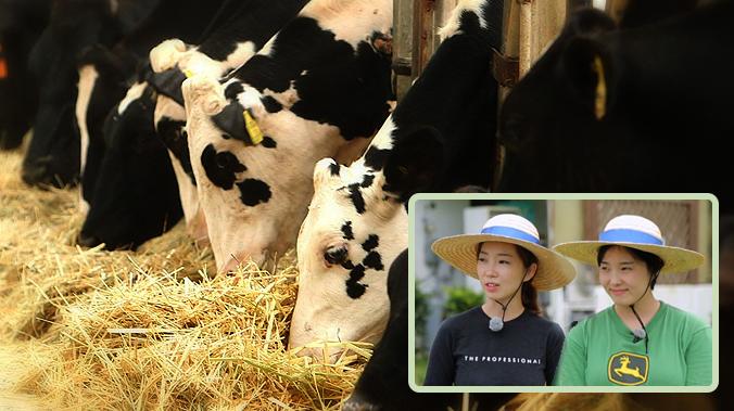 """[10회/낙농업] """"행복한 소가 좋은 우유를 만든다"""" 김지은·김지아 농부 이미지"""