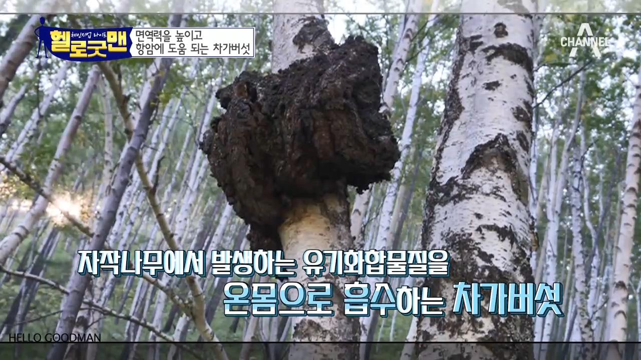 춤신춤왕 굿맨이 마시는 검은 물의 정체는?! 차가버섯은 사랑입니다♡ 이미지