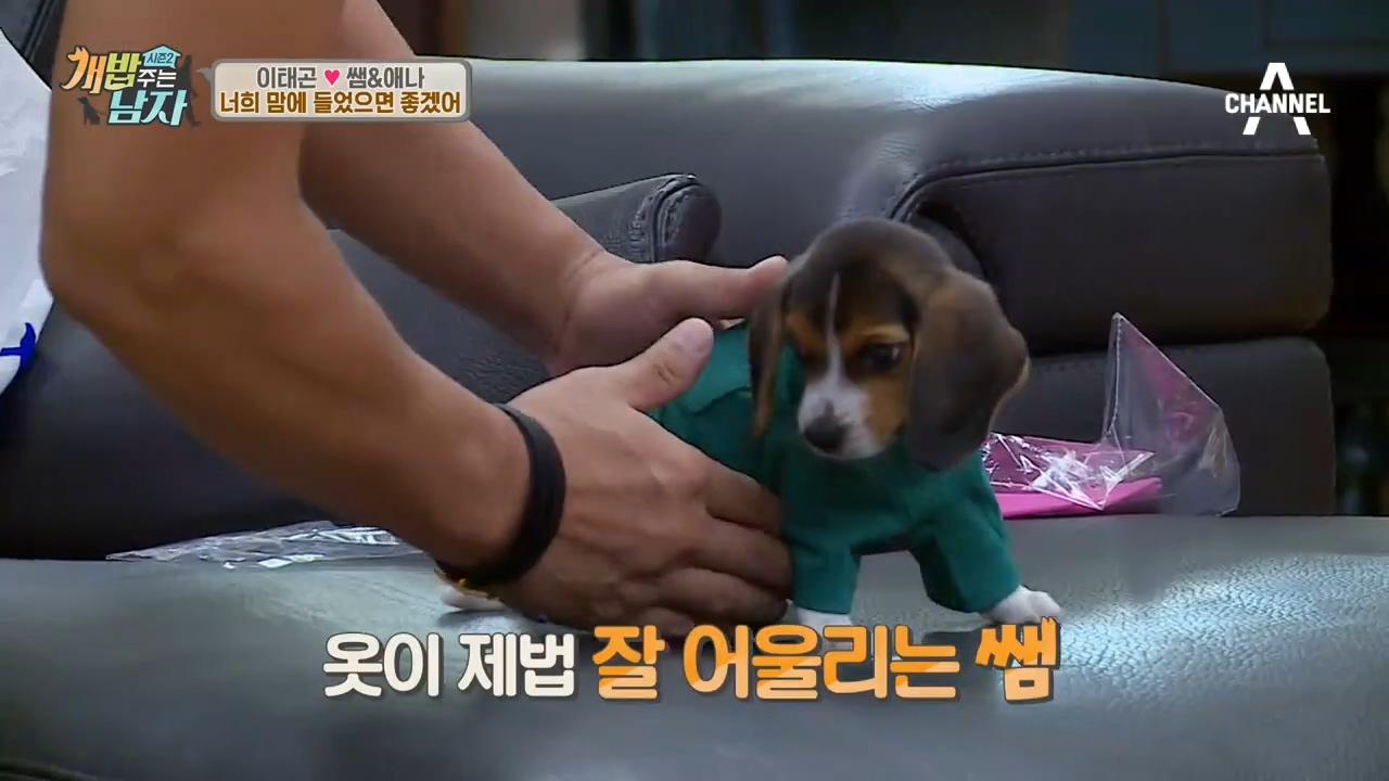 (귀여워♡_♡) 비글남매 물품 도착~♪ #흔한_犬남매의_시밀러룩(?) 이미지
