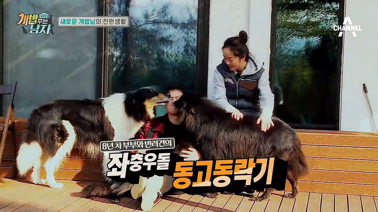 (NEW) 개밥男女가 떴다! 김민교네 식구를 소개합니다! #5犬 #작명센스ㅋㅋ  이미지