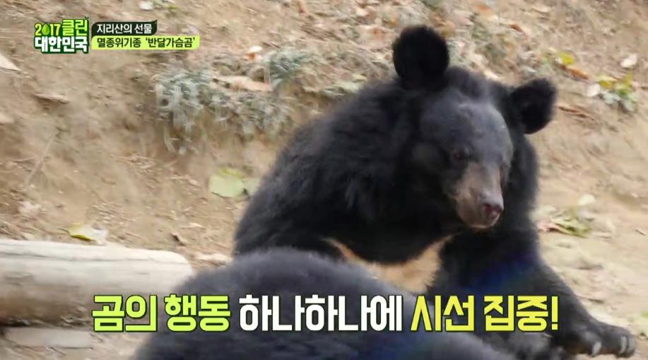 지리산 슈퍼스타★반달가슴곰을 만나러 간 아이들 (찰칵찰칵) 이미지
