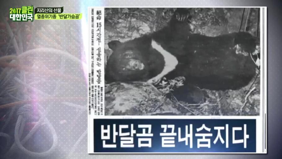 (눈물이_주룩) 반달가슴곰을 아프게 하는 사람들ㅜㅜ  이미지