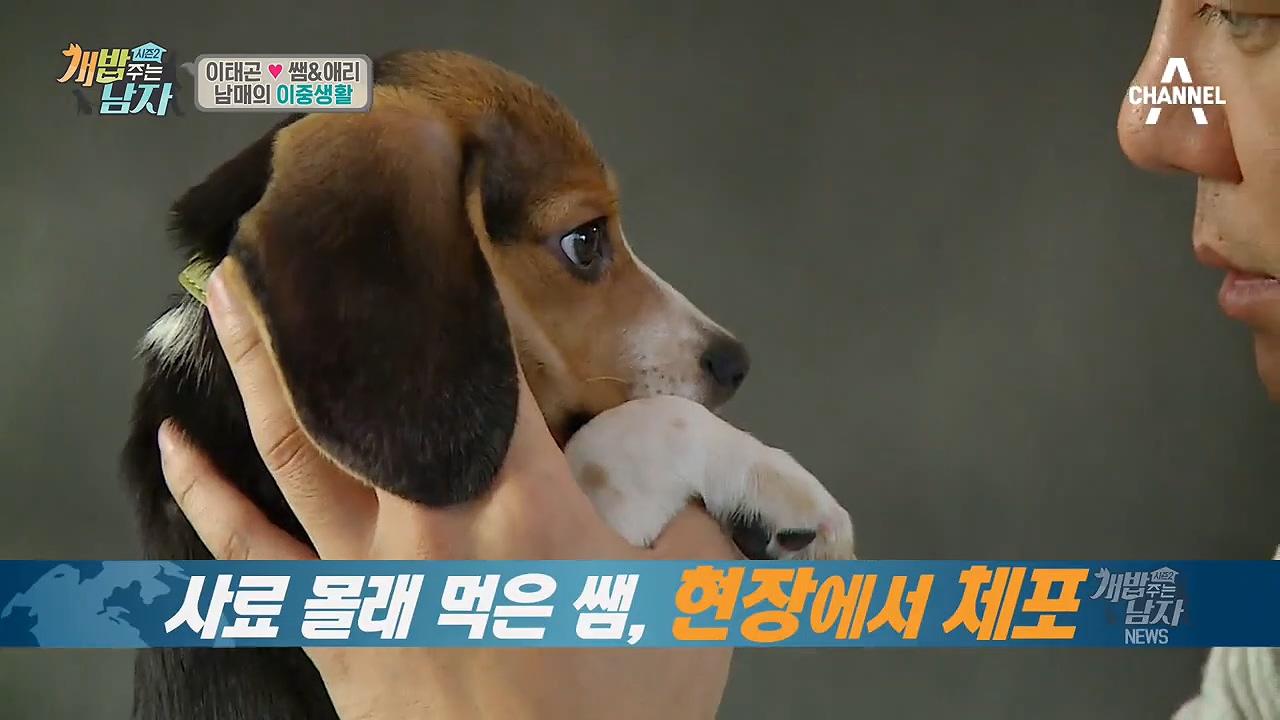[현장검거☆] 곤탐정 출동!