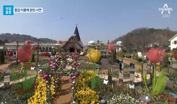 [현장출동]꽃샘추위 '훌훌'…봄꽃축제 '싱긋'