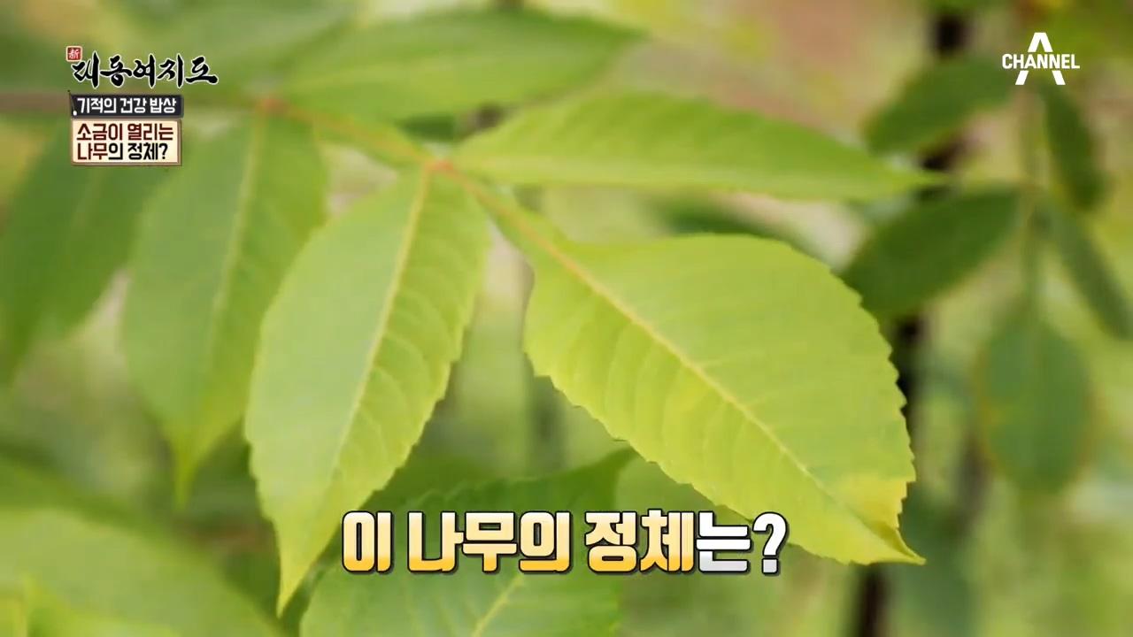 짜게먹으면 건강해진다?! 소금이 열리는 나무의 정체는? 이미지
