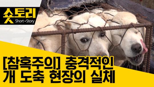 [숏토리]개 도축 현장 공개