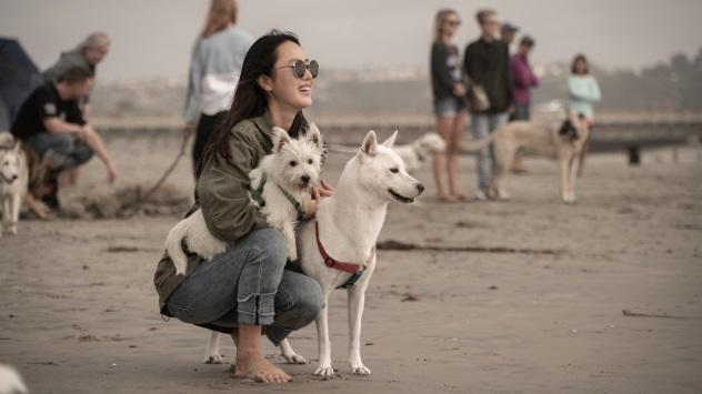 '개묘한 여행' 스타와 반려동물의 글로벌 여행 프로젝트