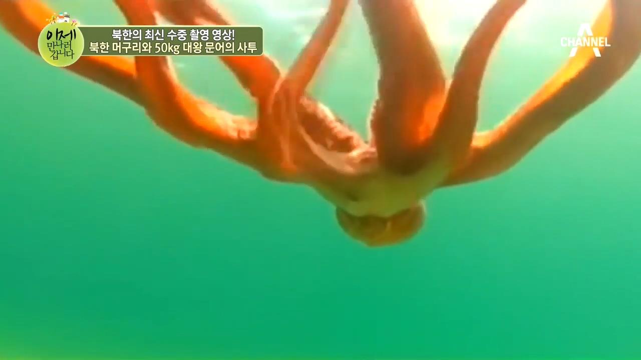 신비한 북한 바다의 세계! 북한 머구리와 50kg 대왕 문어와의 사투! 이미지