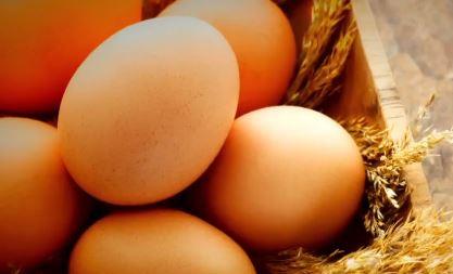 달걀 껍데기에 산란일 표기 이미지