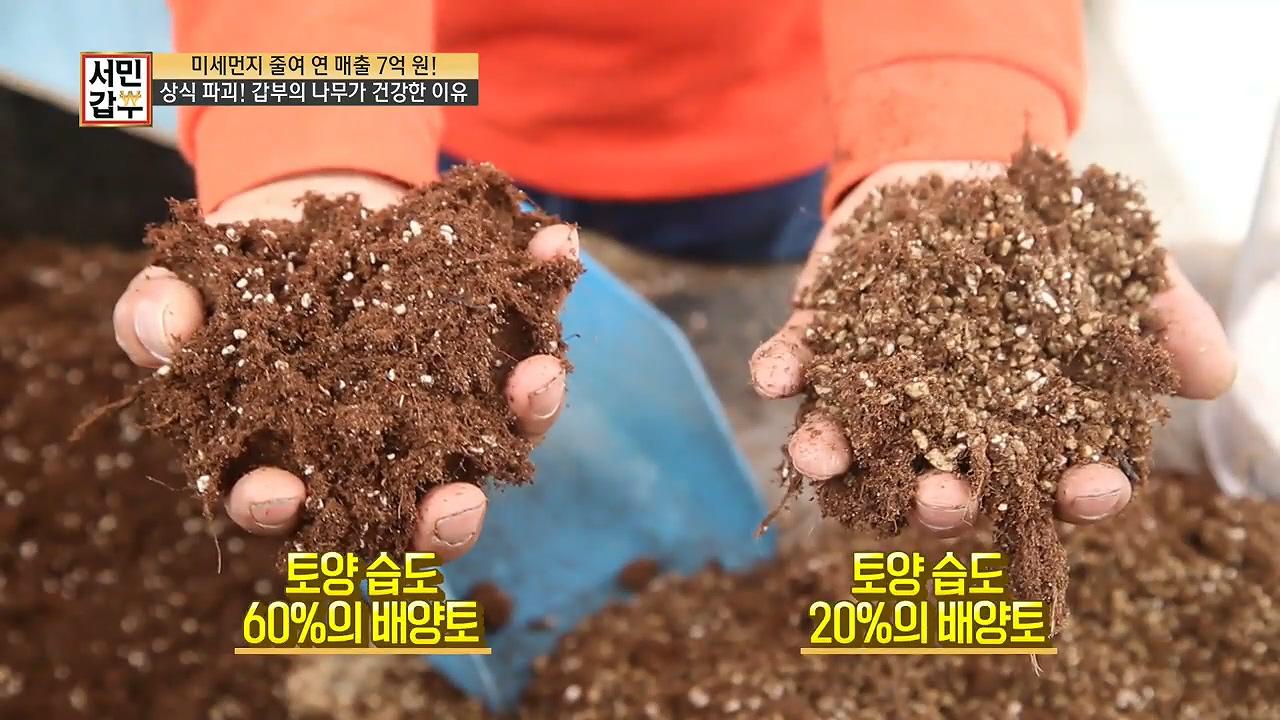 상.식.파.괴! 갑부의 나무가 건강한 이유는 따로 있다?! 이미지