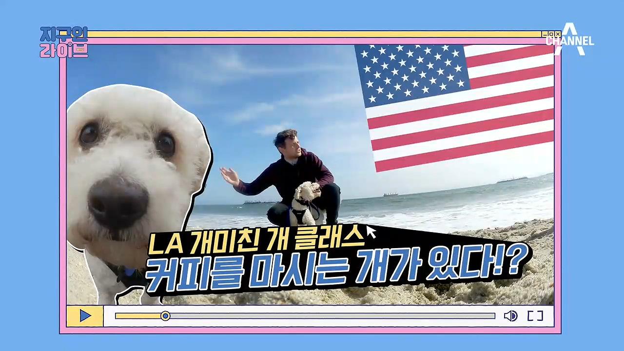 애견인 라이프 in LA! 미국에서는 강아지가 ☆커피☆를 마신다고?!(ft.개푸치노) 이미지