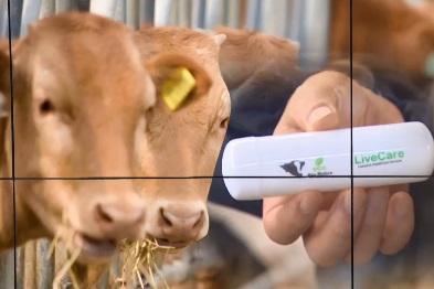 IoT 기술로 똑똑해진 농축산업…주사기 필요 없는 목장
