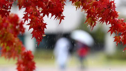[날씨]오후부터 '가을비'…어제보다 기온 떨어져