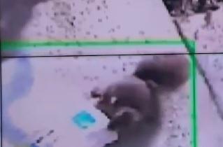 [꿀잼뉴스]CCTV에 딱 걸린 깜찍한 '택배도둑' 정체