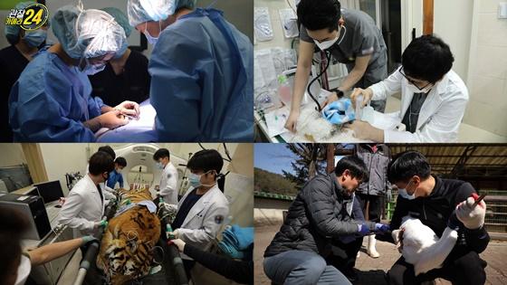 '관찰카메라 24' 심장이 뛴다…동물 생명의 최전선을 가다