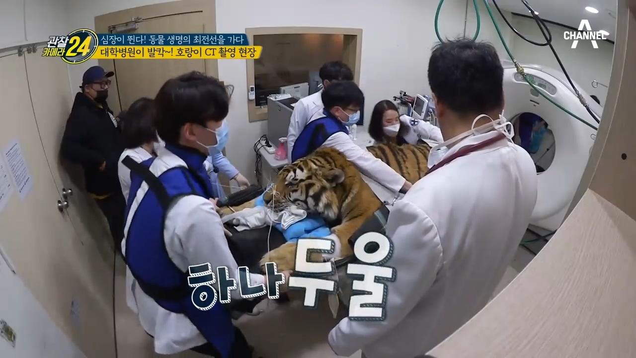 잠들었어도 호랑이는 호랑이ㄷㄷ... 대학병원 뒤집어 놓은 CT촬영 현장! 이미지