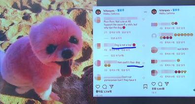 [세상터치]'알록달록' 강아지 염색, 학대? / 장마철 우산 매너는?