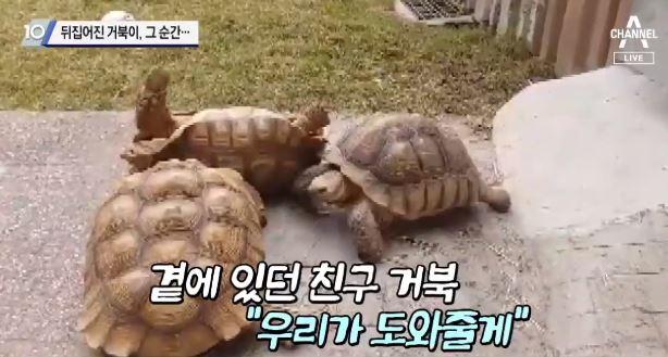 뒤집어진 거북이, 그 순간…