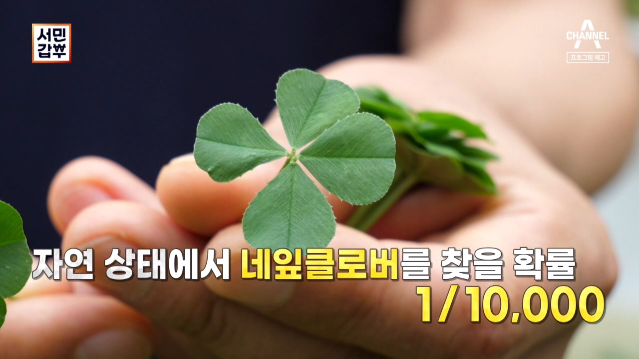 [예고] (실화?) 행운의 상징