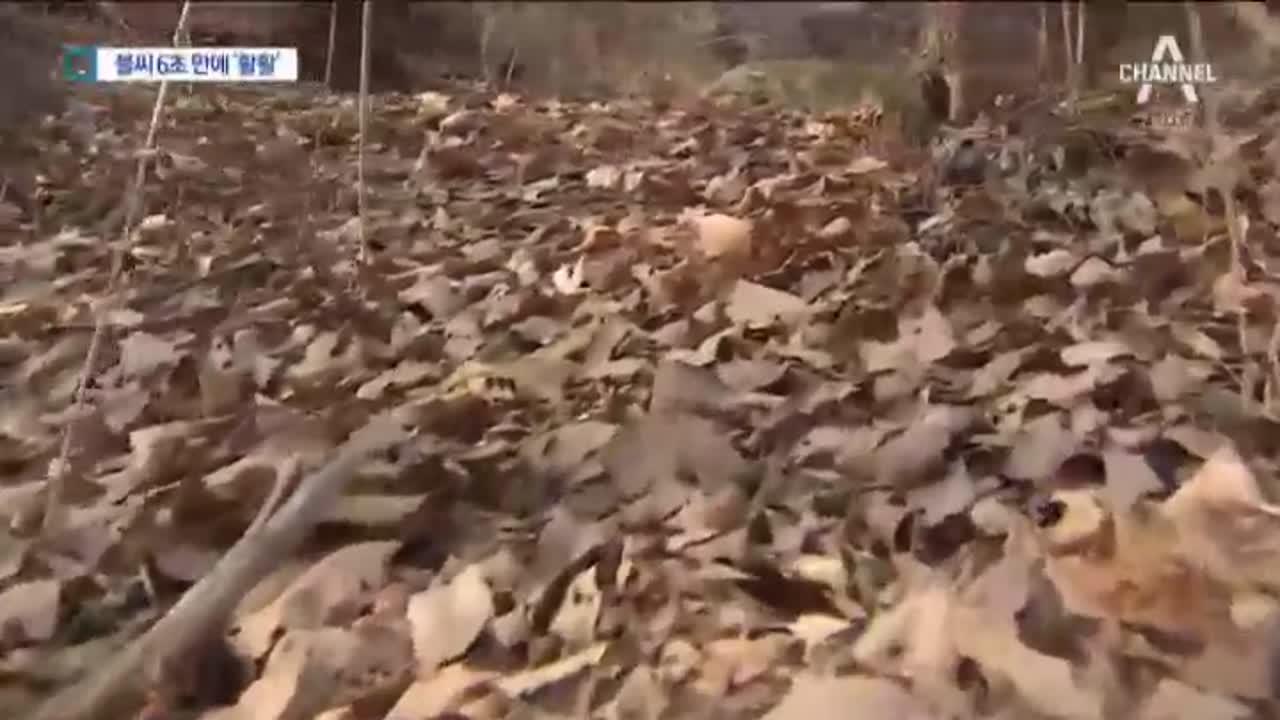 1층 높이 낙엽도 6초면 '활활' 이미지
