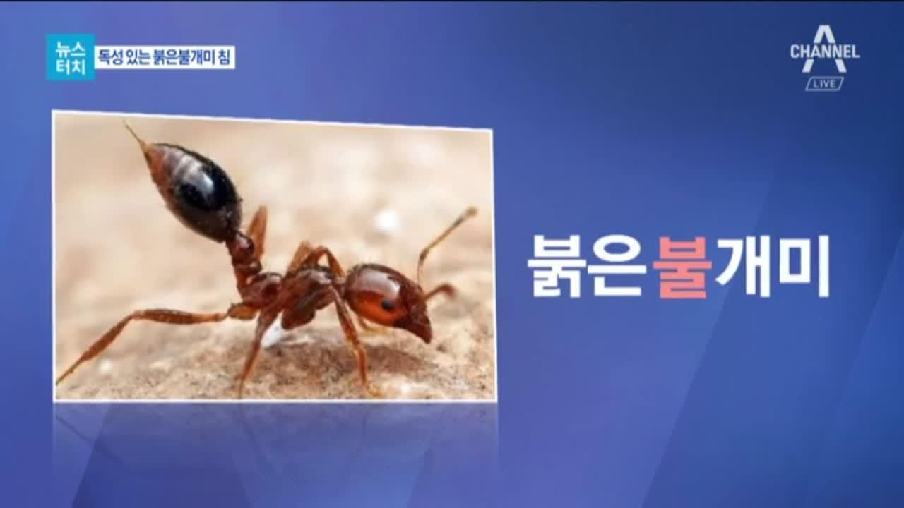 [뉴스터치]물리면 사망?…평택항서 또 붉은불개미