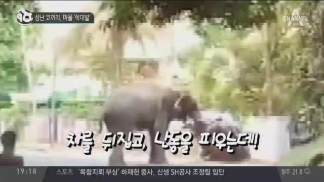 성난 코끼리, 마을 '쑥대밭'