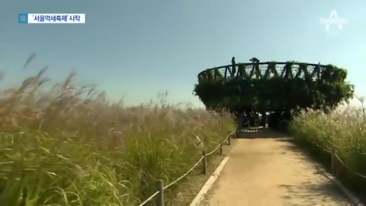 [현장출동]오색반짝 가을꽃 가득…'서울 억새축제' 시작