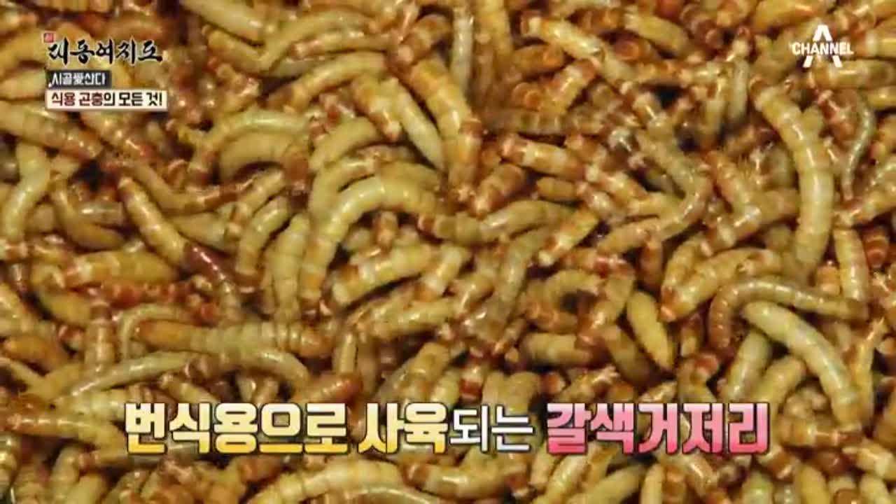 요즘 대세! '식용 곤충'으로 연 매출 2억 원?!   이미지