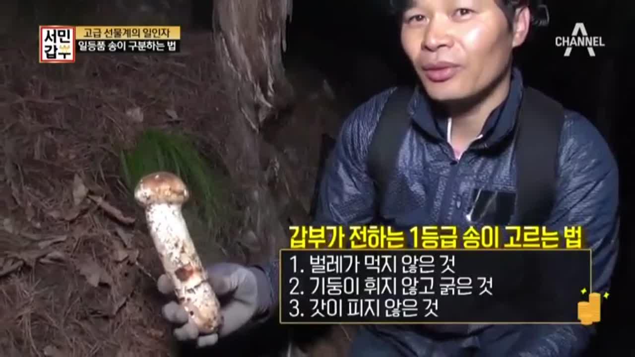 버섯마니가 공개하는 좋은 버섯 고르기 TIP 大방출 이미지