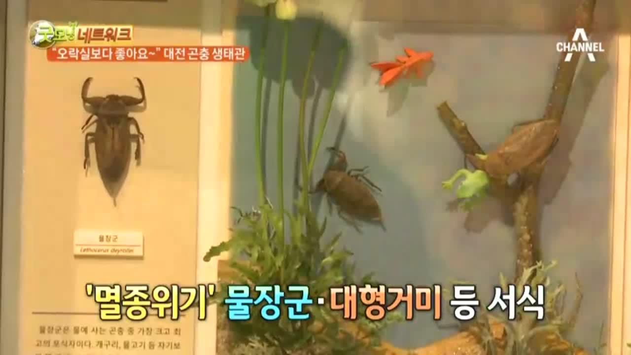 """굿모닝네트워크 - """"오락실보다 좋아요~"""" 대전 곤충 생태관 이미지"""