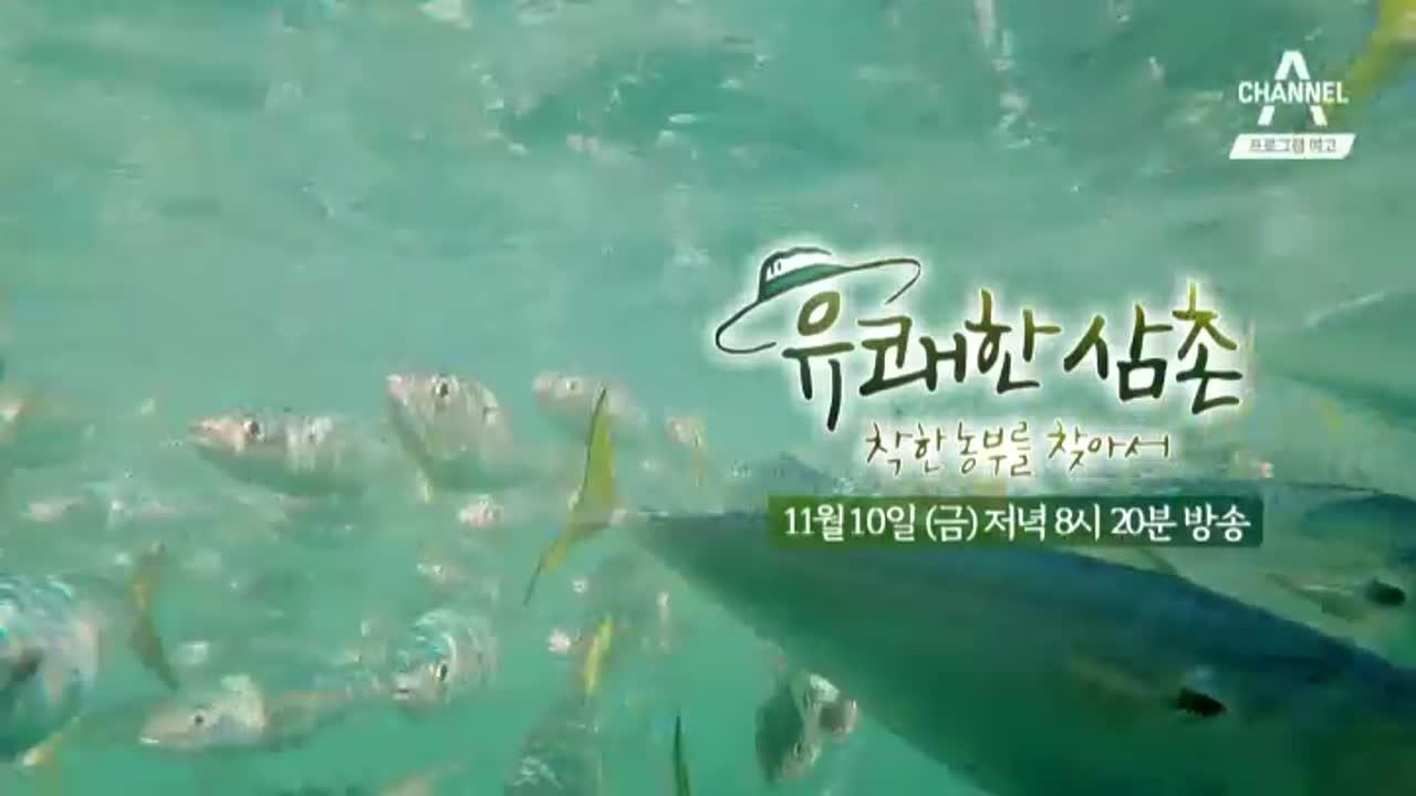[예고] 고등어마을 욕지도에서 찾은 국민생선 '착한 고등어'  이미지