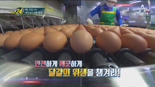 [예고] 안전하게 깨끗하게 달걀의 위생을 챙겨라!  이미지