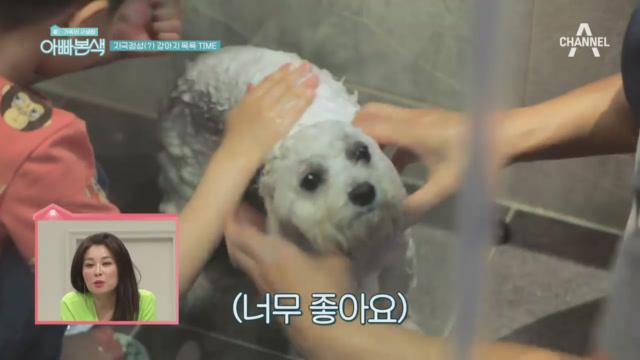 지극정성(?) 기준과 아들 지호의 강아지 목욕 TIME!(ft.개금손⊙_⊙) 이미지