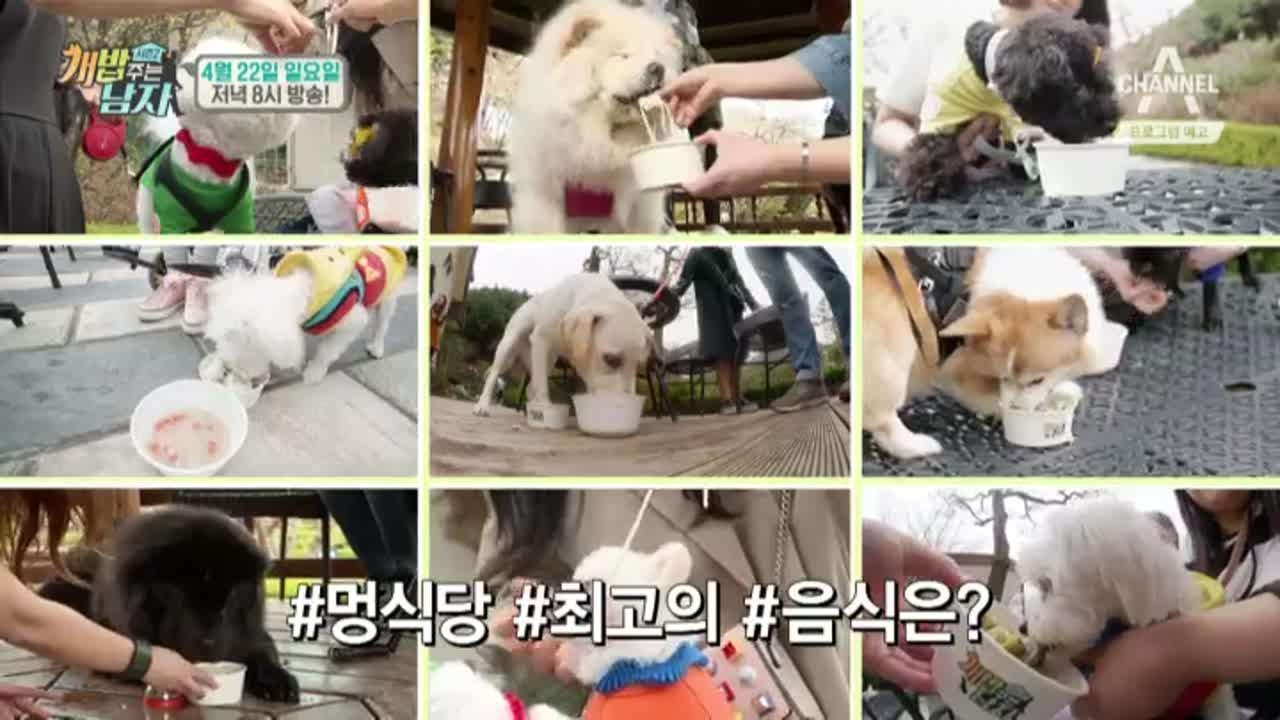 [예고] 개밥 가족들의 못다 한 마지막 이야기 이미지