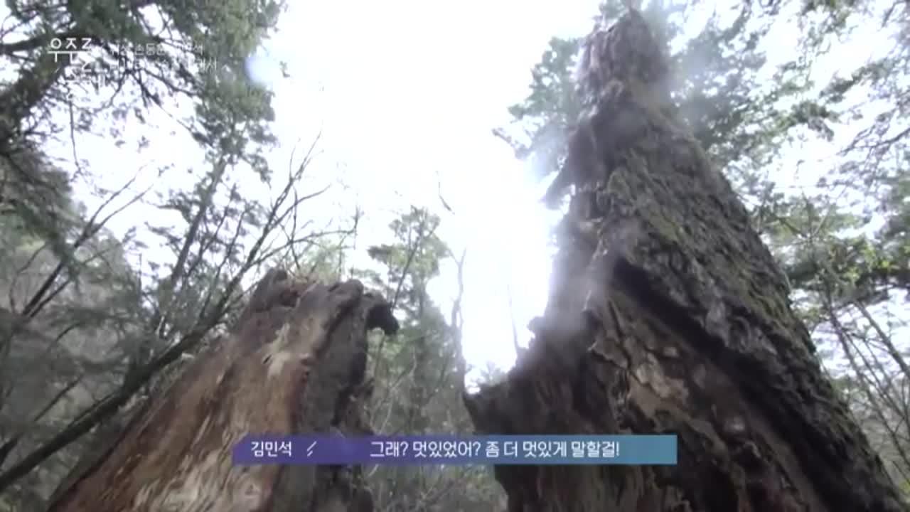 촉촉한 비가 내리는 전나무 숲에서, 아름답게 쓰러진 것? 이미지