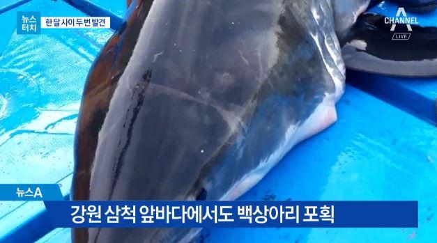 [뉴스터치]온난화에…해안가 곳곳 '죠스' 출몰