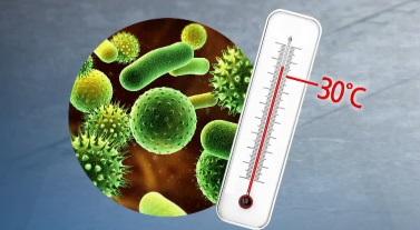 식중독균, 장마철엔 3배 빨리 증식…김밥 어떻게?