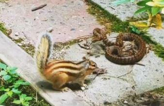 """""""내가 당할 줄 알았지?"""" 뱀 물어죽인 설악산 다람쥐"""