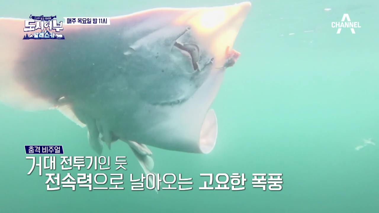 [선공개] 초비상사태! 알래스카 대홍어 도주 사건