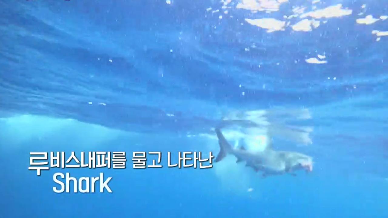 [다음이야기] 상어 등장?! 루비스내퍼를 물고 나타난 ....