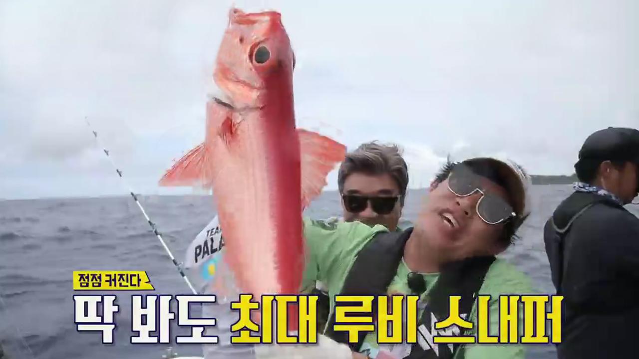 경규에게 찾아온 '특大 루비 스내퍼 3호' (경규 급행....