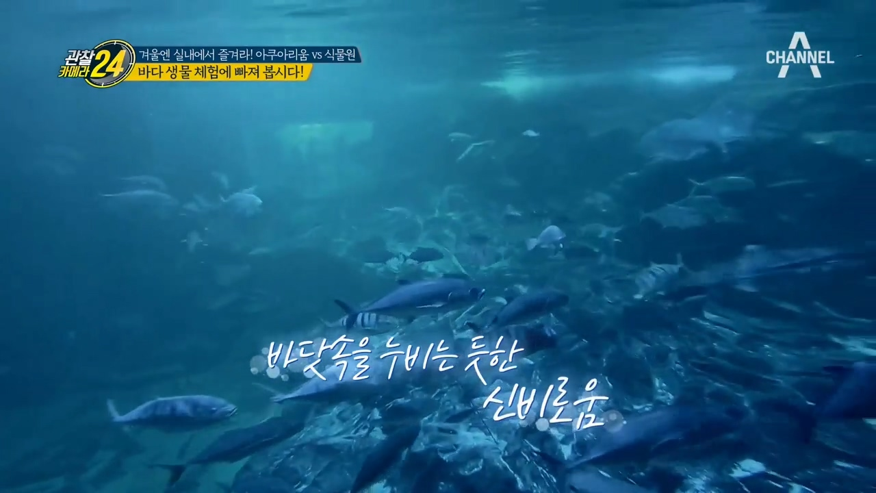 바다 생물 체험부터 아쿠아리움의 꽃, 해양생물 피딩 쇼....