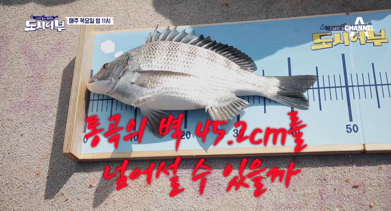 [선공개] 통곡의 벽 감성돔 45.2cm! 용족경규는 ....