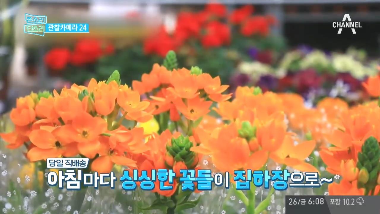 '채널A 시청자 마당' 386회
