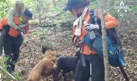 인명구조견 '소백이', 실종된 70대 노인 발견